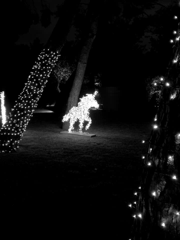 #christmas #light #decoration #winter #unicorn #decorate