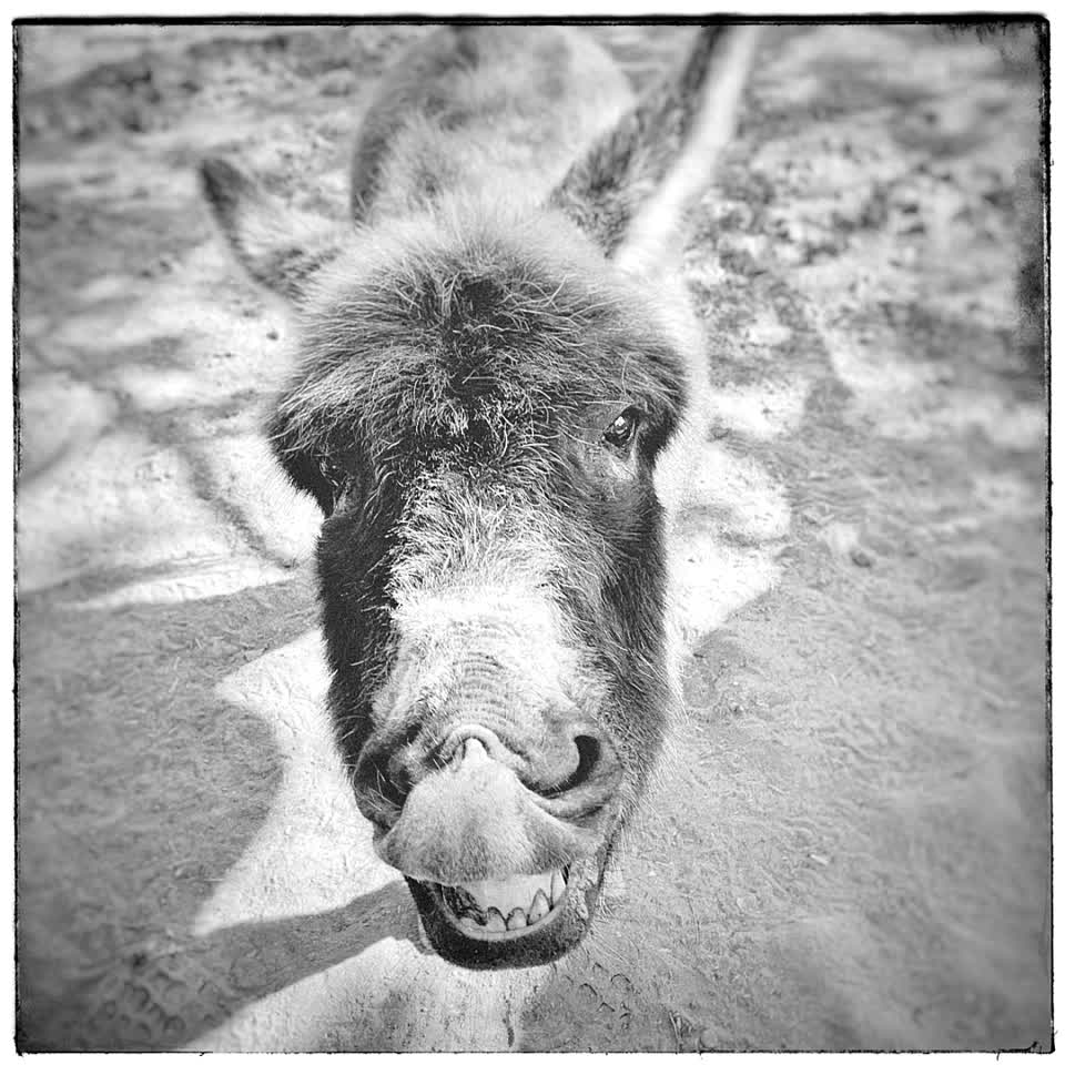 #art #donkey #ass #photography