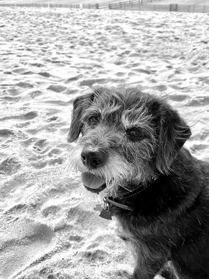 #niecedog #maggie #love #unify #beach #alfred