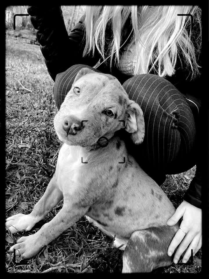 Sweet puppy!!! #cute #love #puppy #spots #ejimoo #nocomment #follow #like #explore #alfred #2020