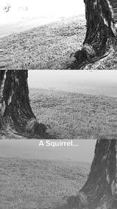 #fyp #foryou #tiktok #verified #alfred squirrel 🐿